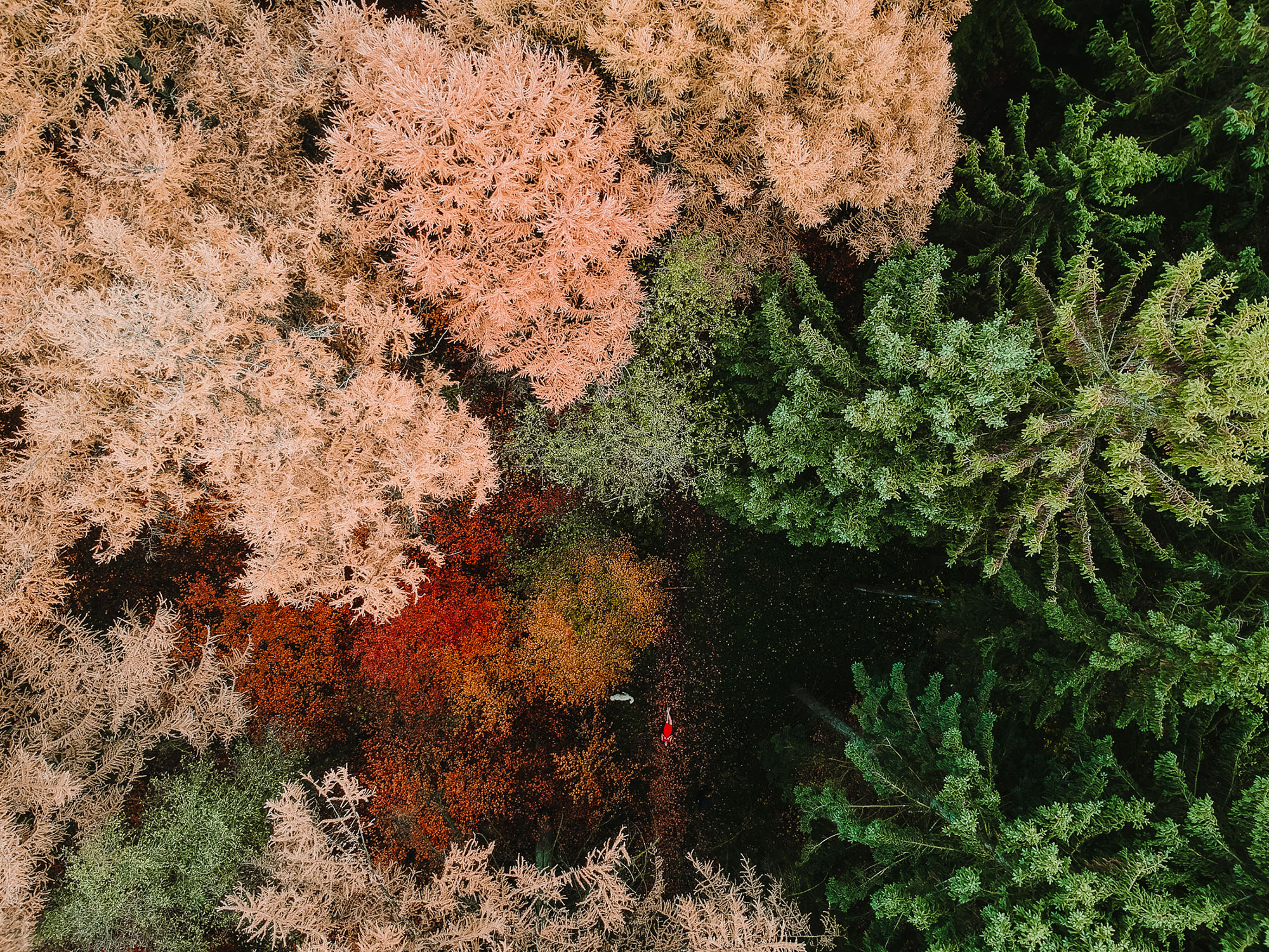 dji-fromabove-autumnleafs-buxtehude